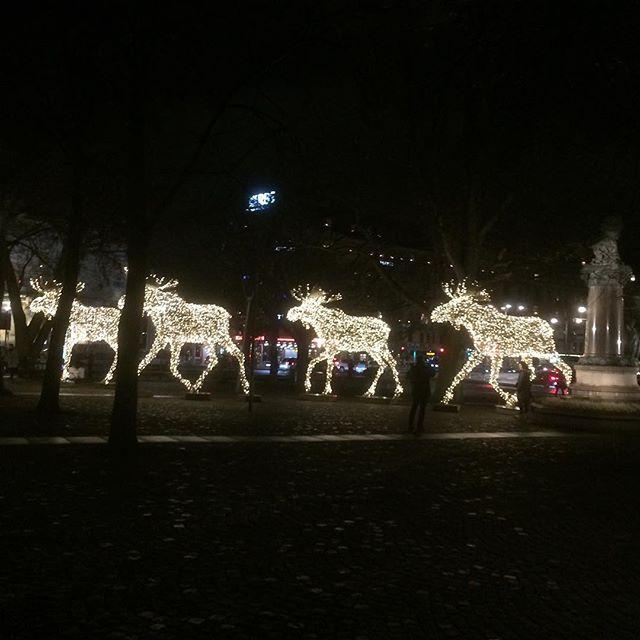 Julälgar på Nybroplan!