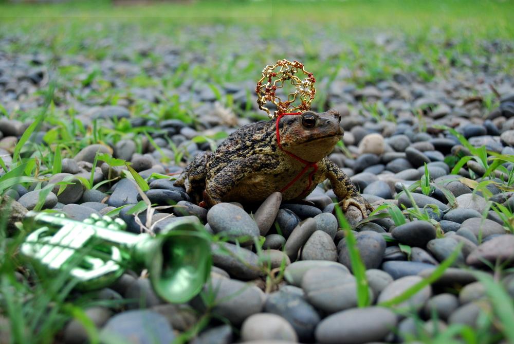 toad2.JPG