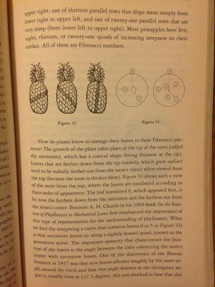 p.111 / pineapple patterns