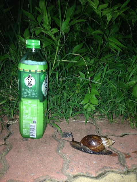 An actual snail i actually saw. Bottle for scale.