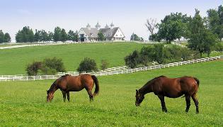 horse-farm.jpg
