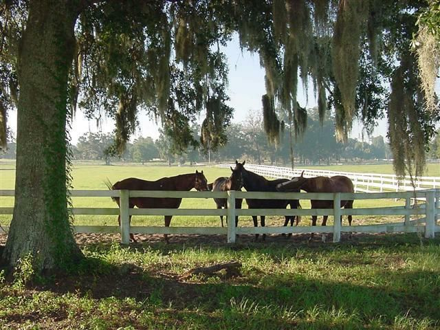 horse-farm2.jpg