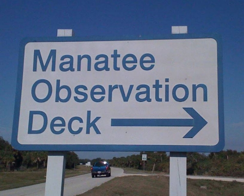 Oct 13 Manatee observation.jpg