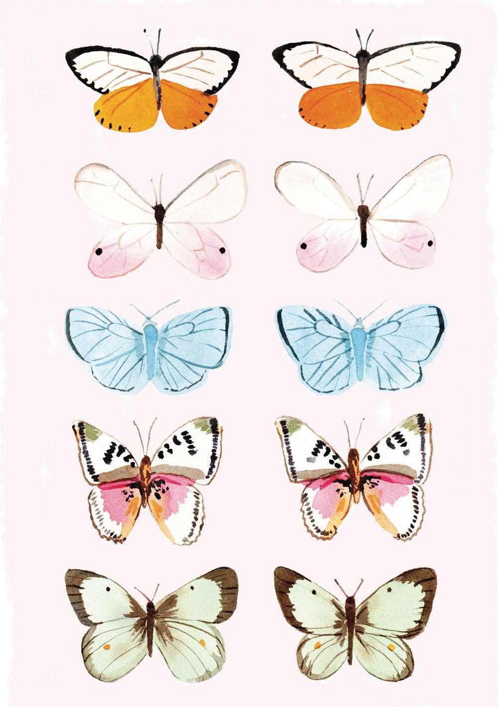 MeganKelso_ButterflyStudy-01.jpg