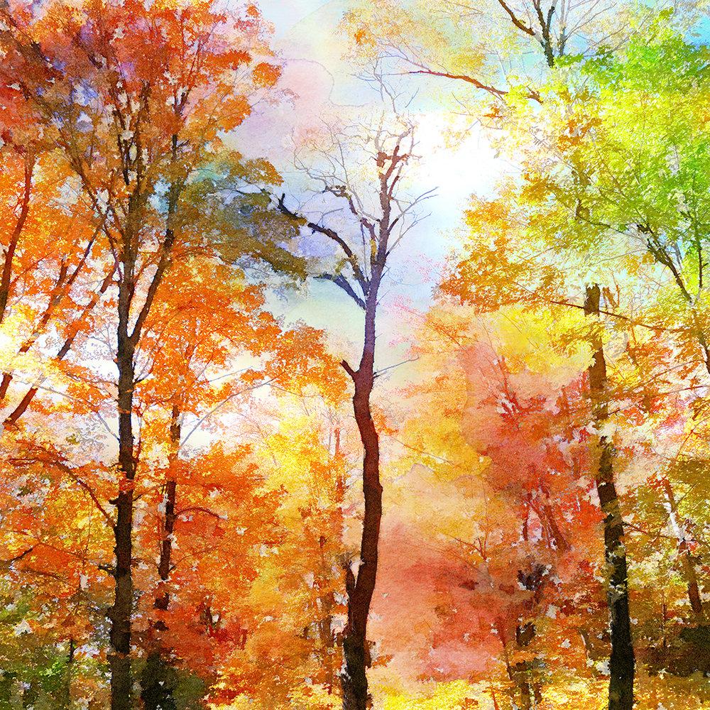Fall (ADK) | 8x8 | $60