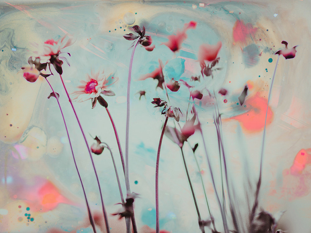 Wildflowers, 2018 | 14x11 | $75