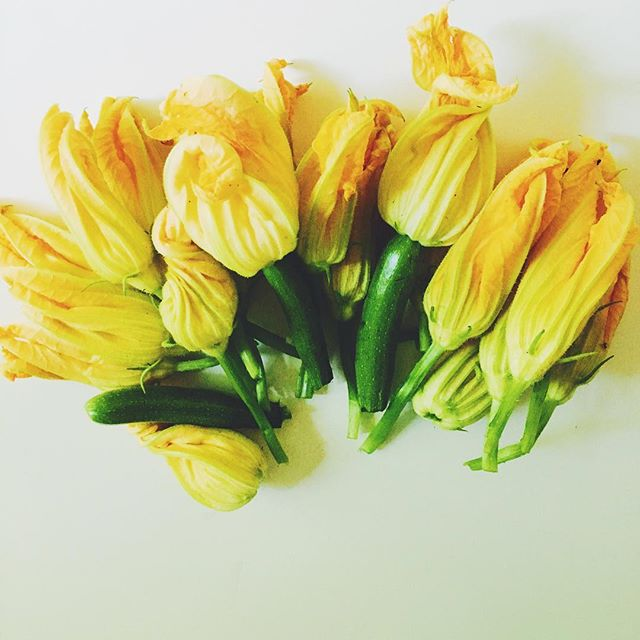 Turns out the more you abuse your garden, the more zucchini blossoms that turn up.