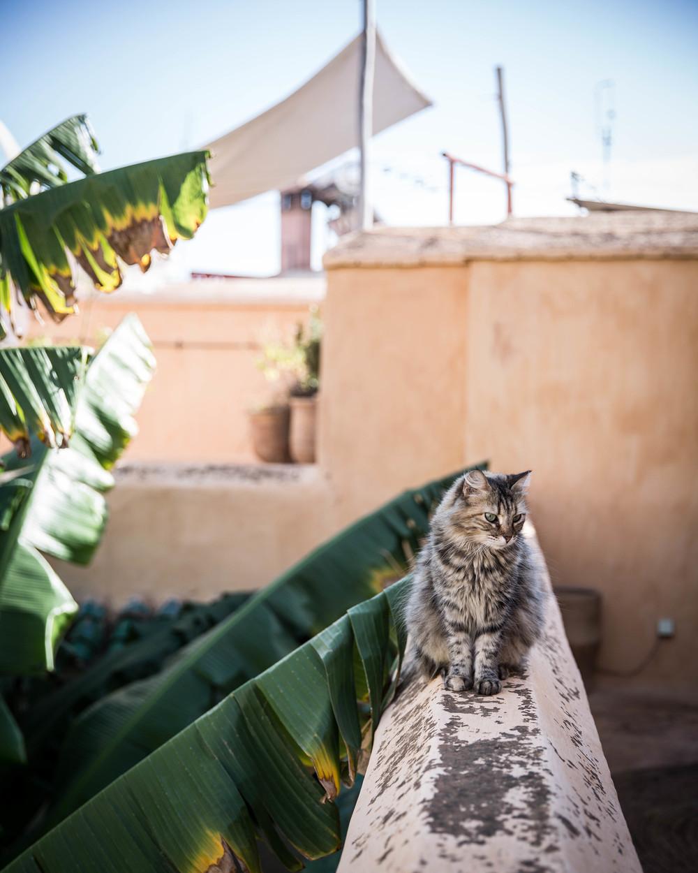 marrakech gobble.jpg