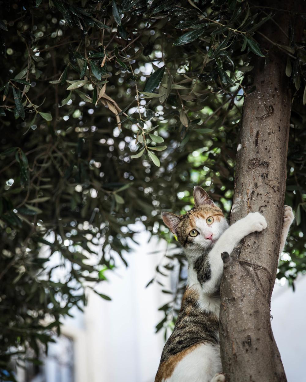 marrakech tree cat.jpg