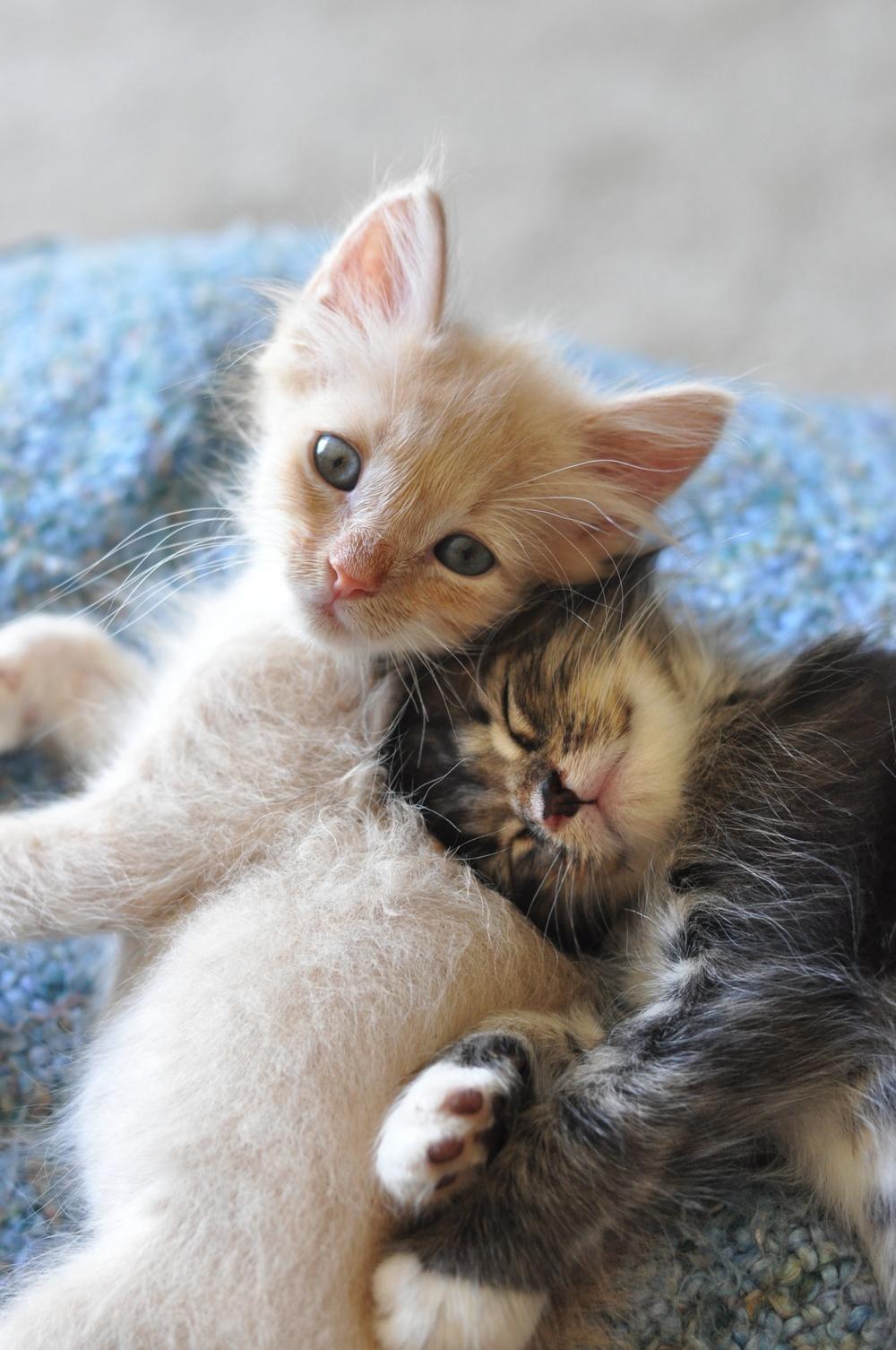 Beanie & Cecil.jpg