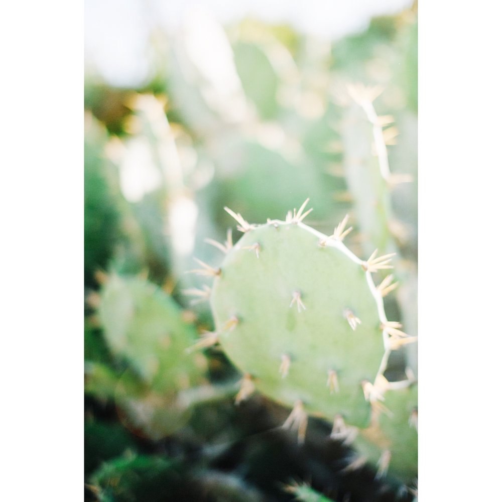 Here's a cute cactus because I hate being cold...