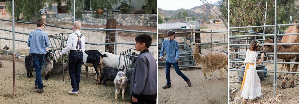 petting zoo at reptacular ranch wedding