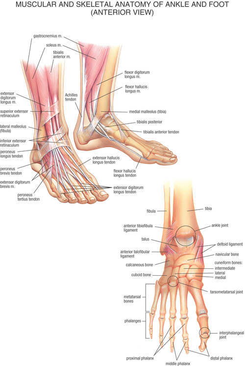 Posterior Ankle Pain Mdm Stories