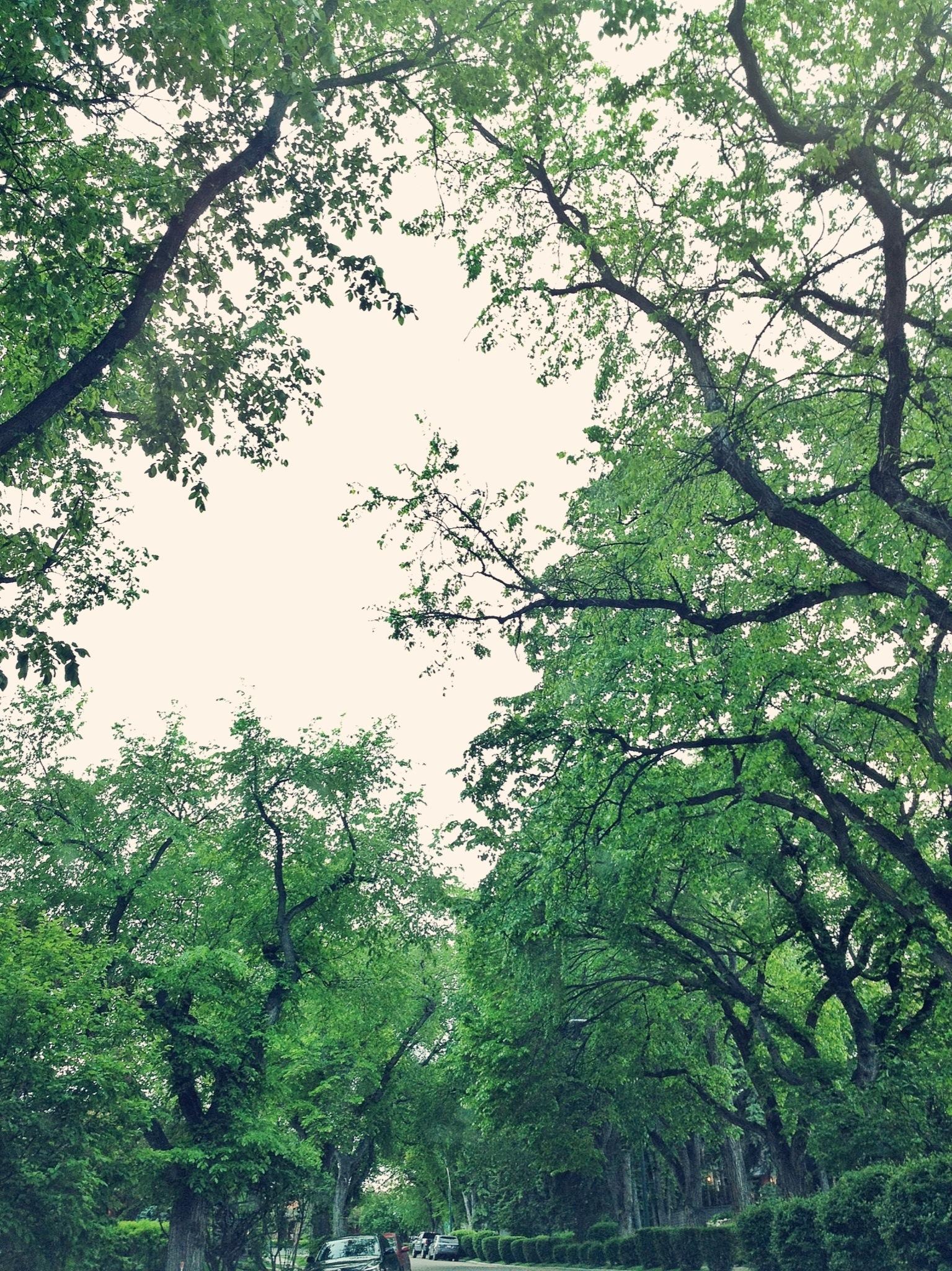 20120611-091958.jpg