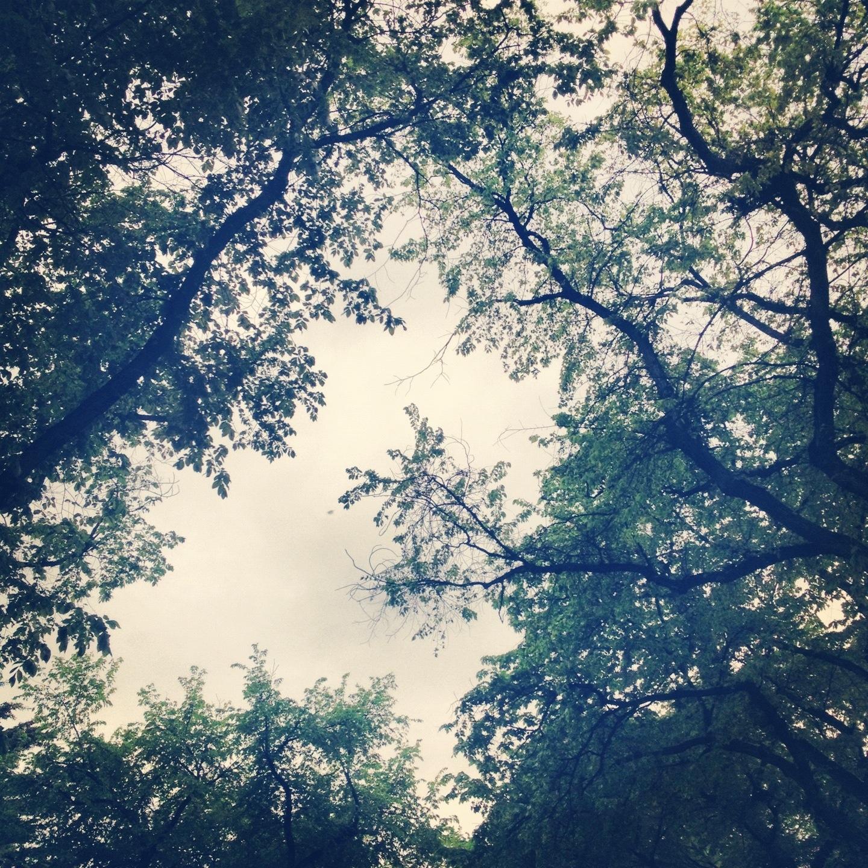 20120611-092115.jpg