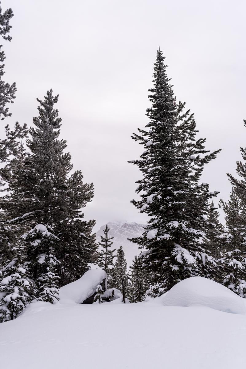 160116-121248-Snowshoeing-c1-9036-2.jpg