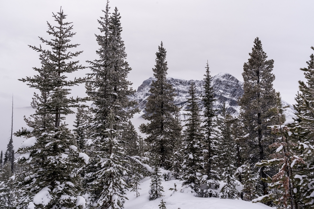 160116-121609-Snowshoeing-c1-9039-2.jpg