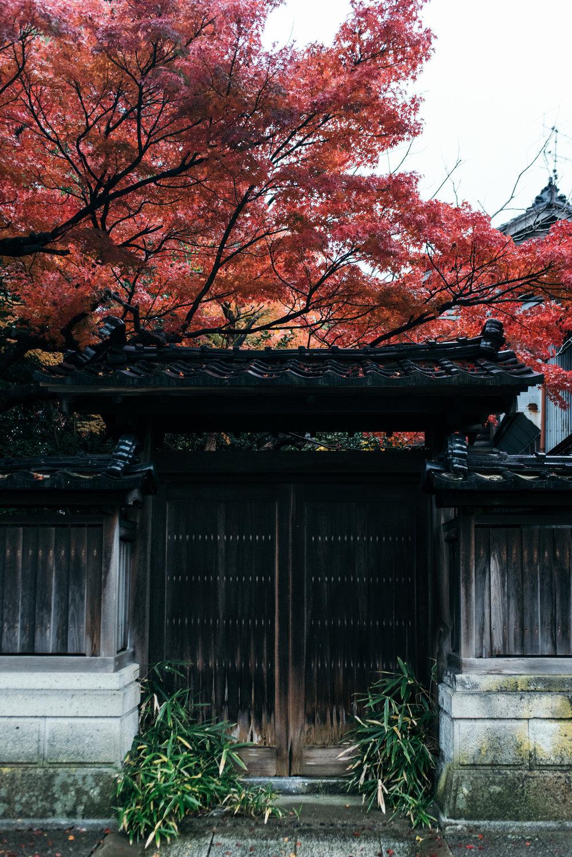 161115-Japan-5003207-080419-9621.jpg