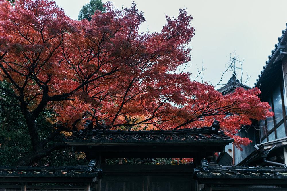 161115-Japan-5003207-080422-9622.jpg
