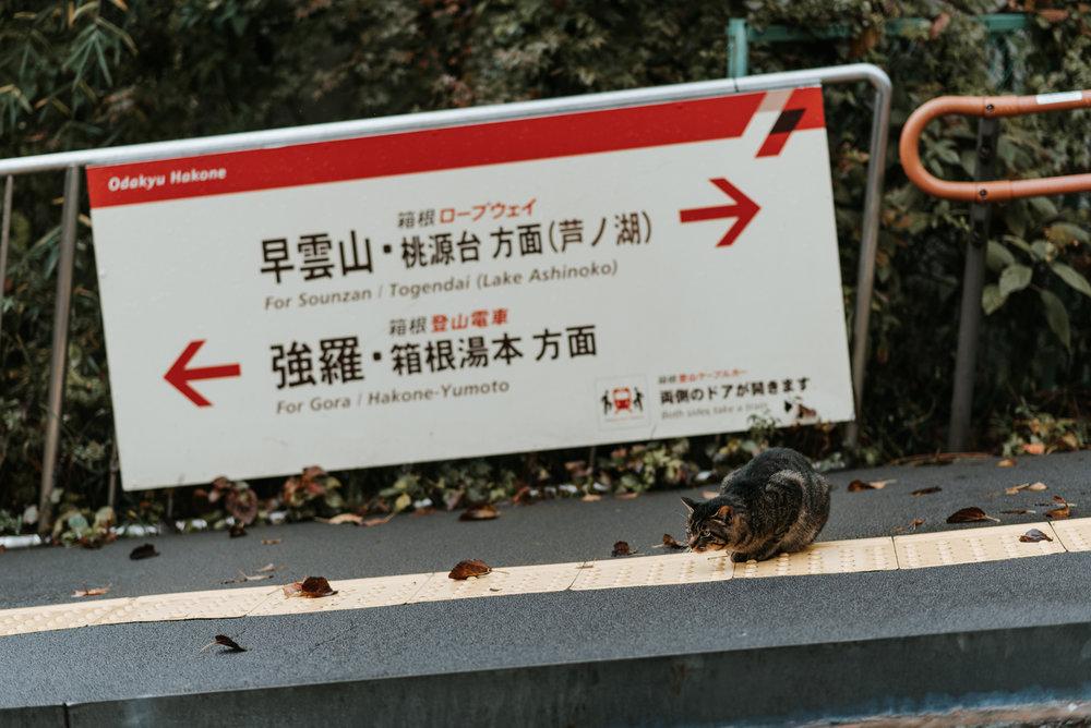 161119-Japan-5003207-102336-0301.jpg