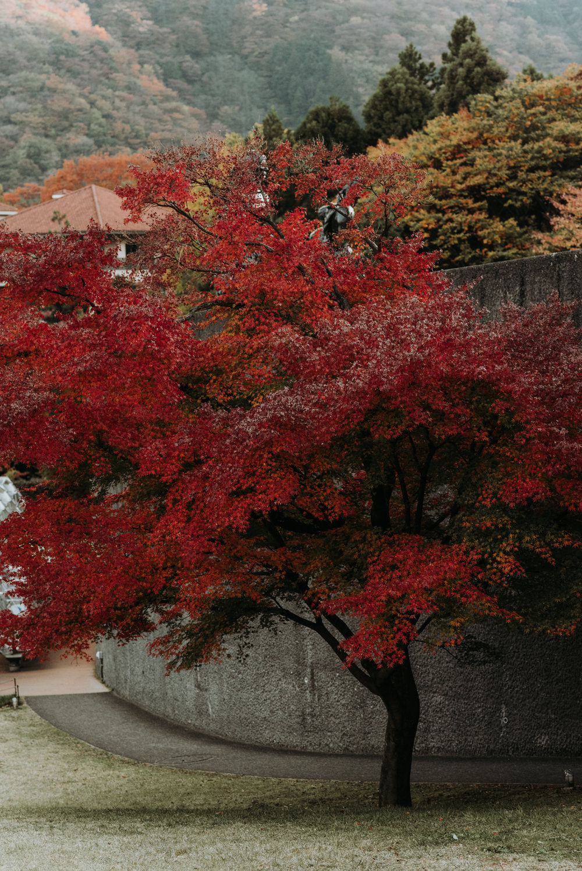 161118-Japan-5003207-152140-0168.jpg