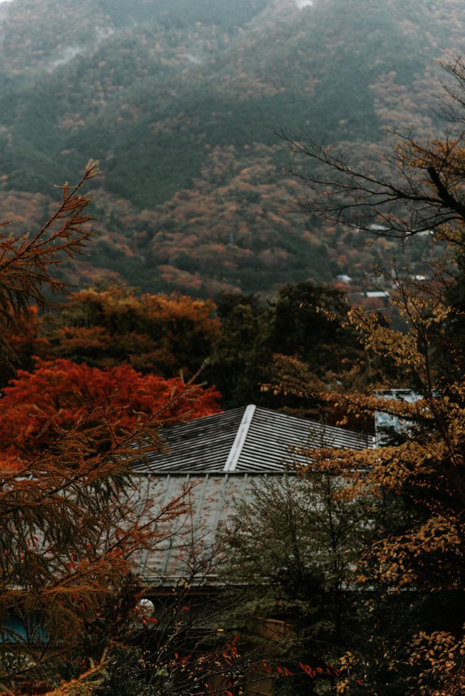 161119-Japan-5003207-094944-0299.jpg
