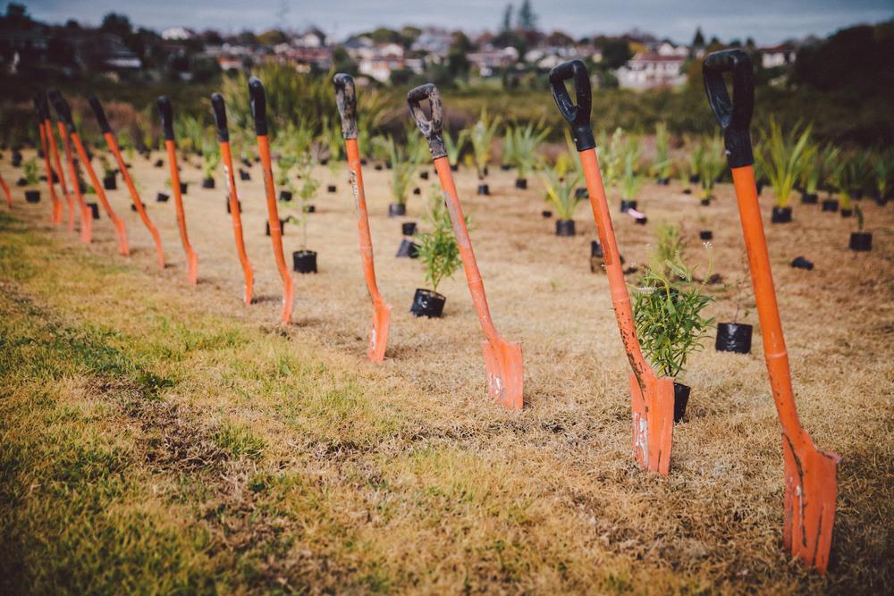 SCL-Tree-planting-9.jpg