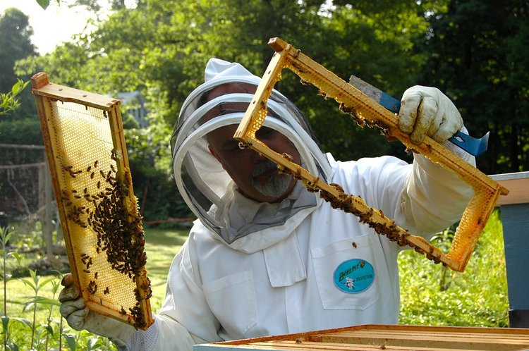 Commercial Beekeeping Goes Solar Smart