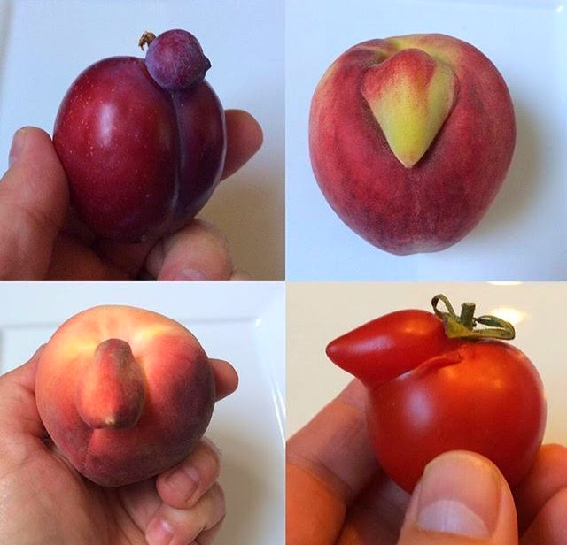 """Birds of Fruit"""