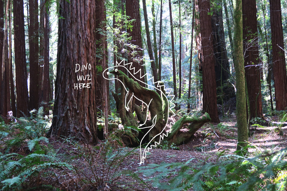 redwoods04.jpg