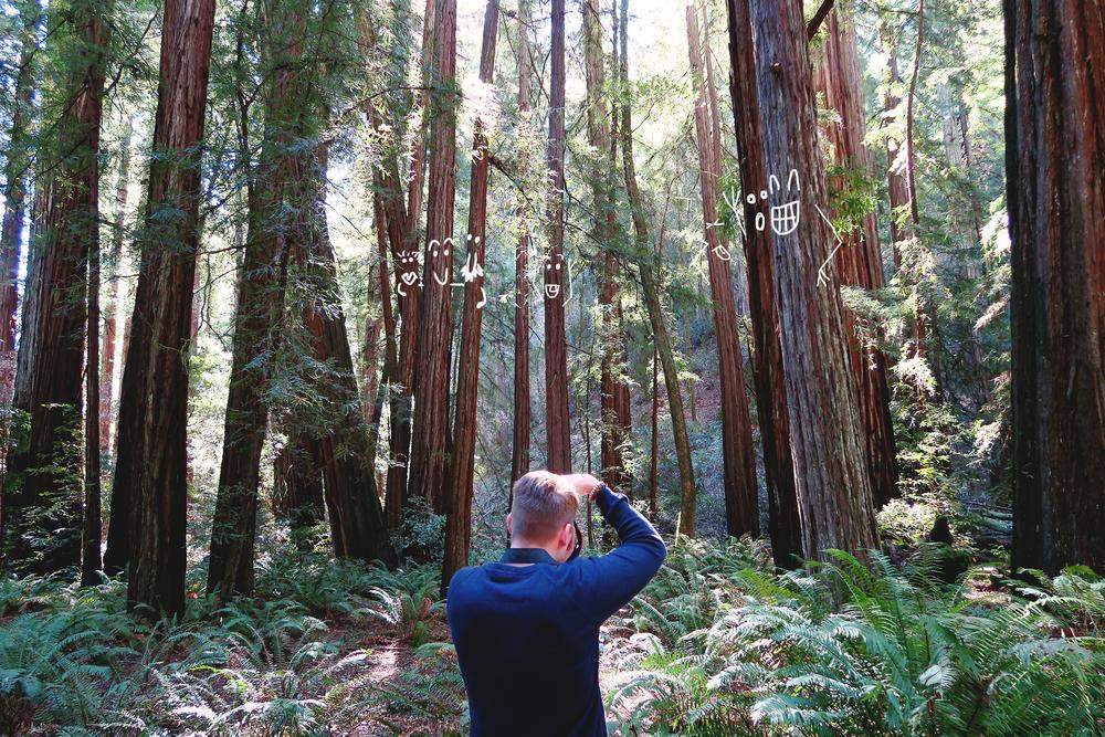 redwoods01.jpg