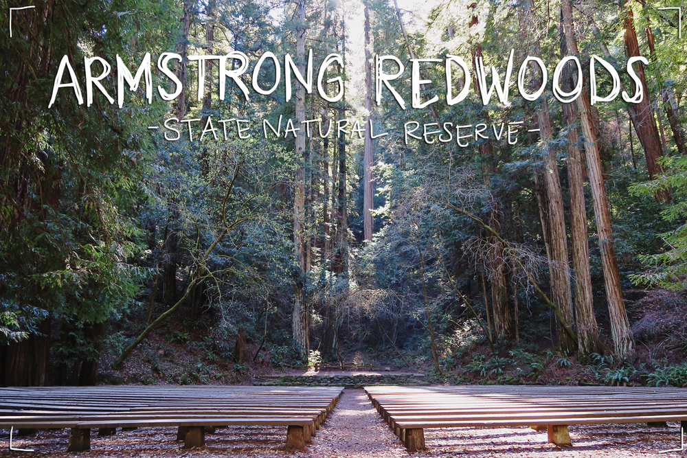 redwoods00.jpg