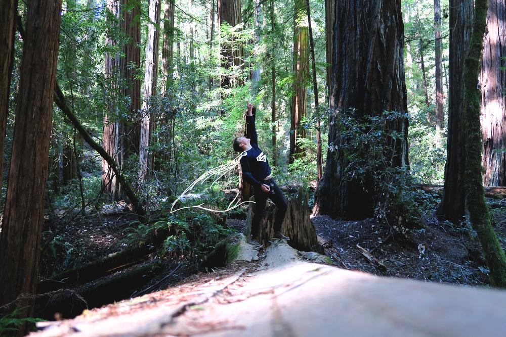 redwoods02.jpg