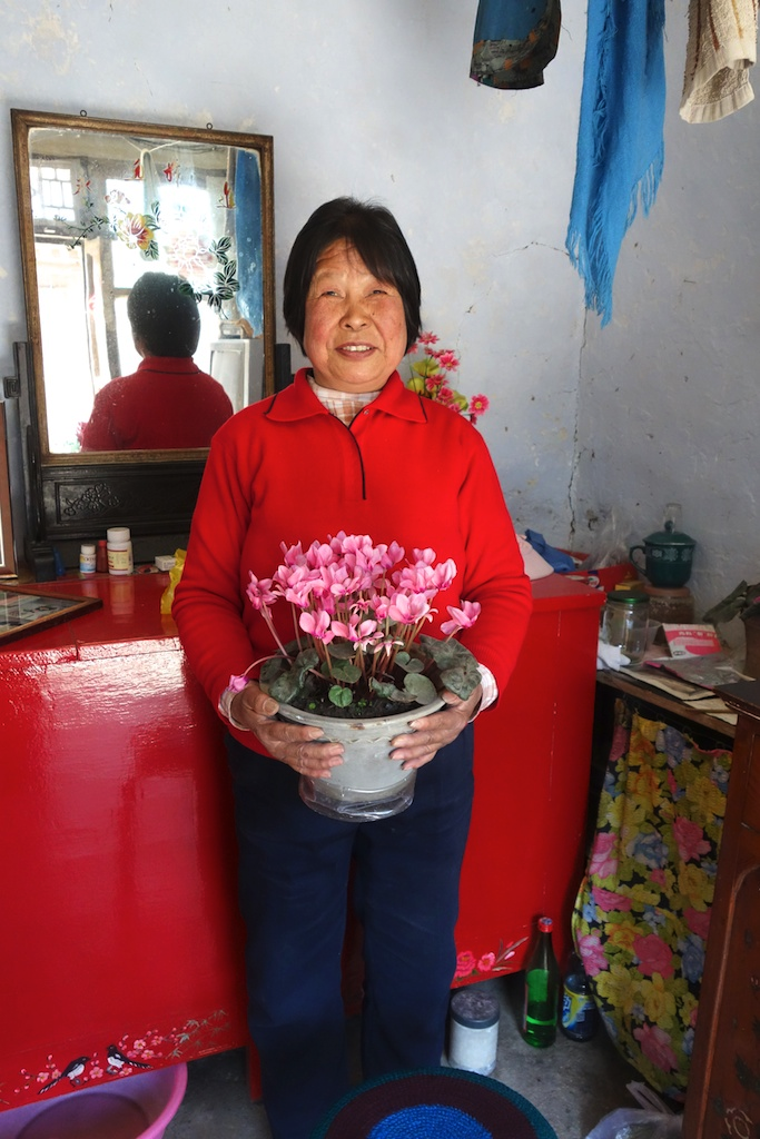 Jingrui with spring blossoms