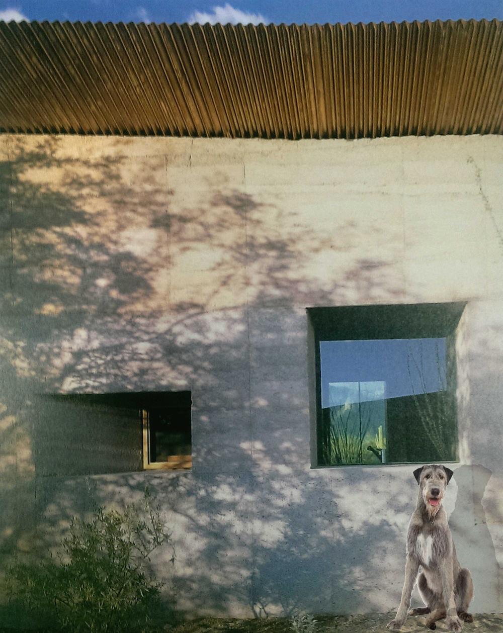 dog exterior.jpg