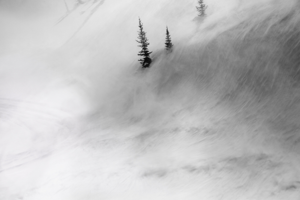 Trees in Wind, 2012