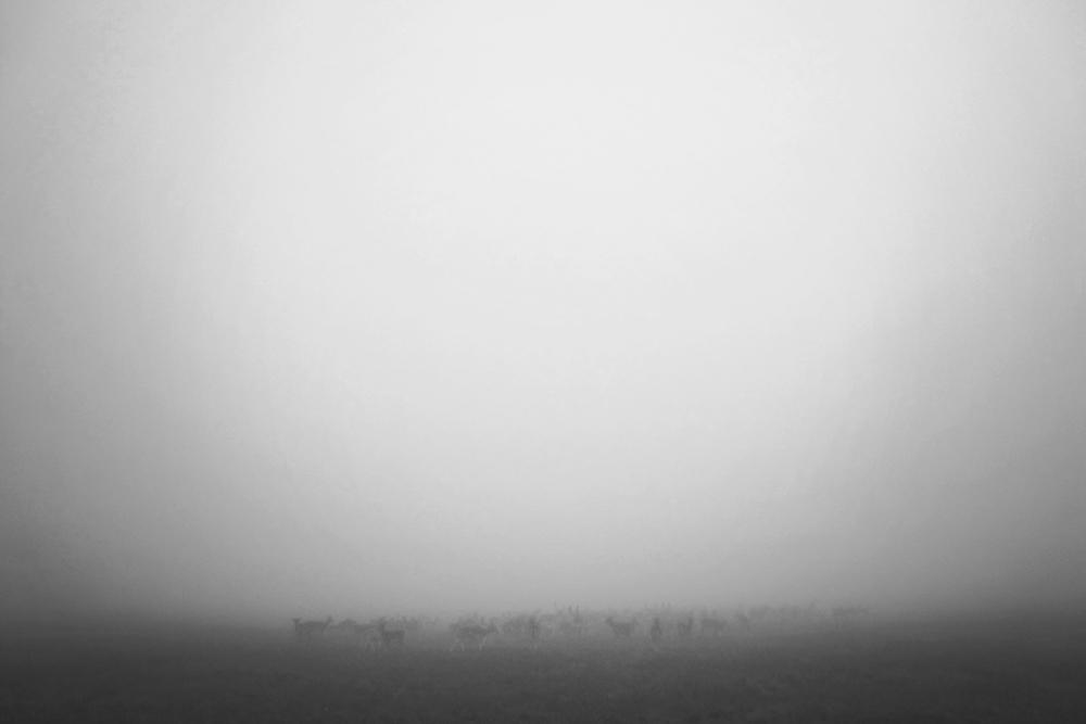 Deers (series: Articulate Silence), 2011