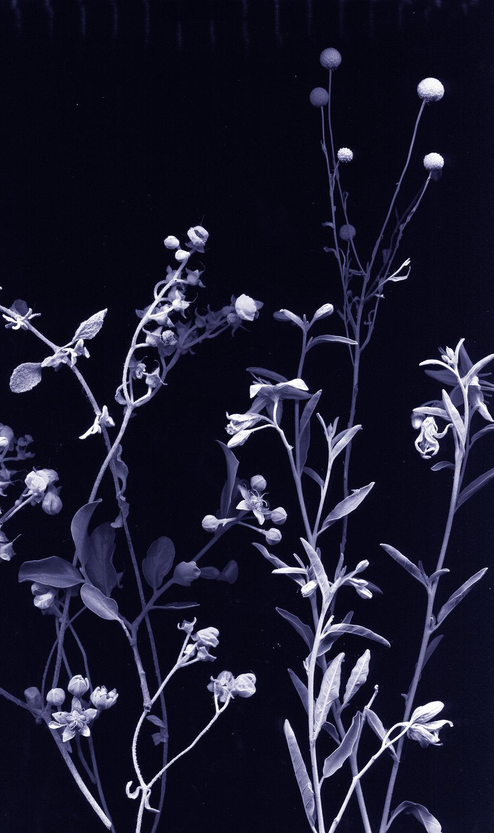 WeiXin Chong | flores nativias .1, 2017