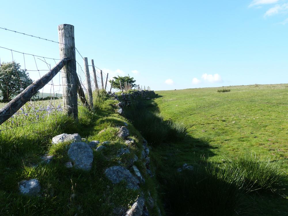 Dartmoor, near Lukesland Gardens