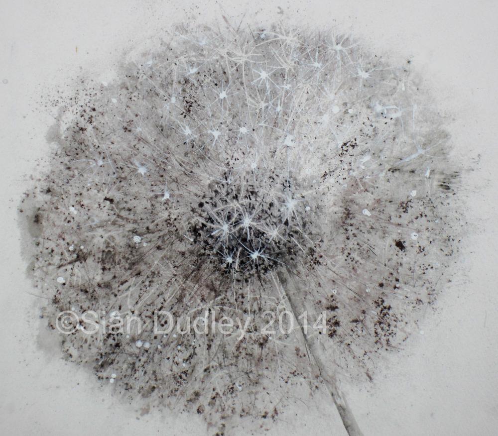 CCharcoal Dandelion.jpg