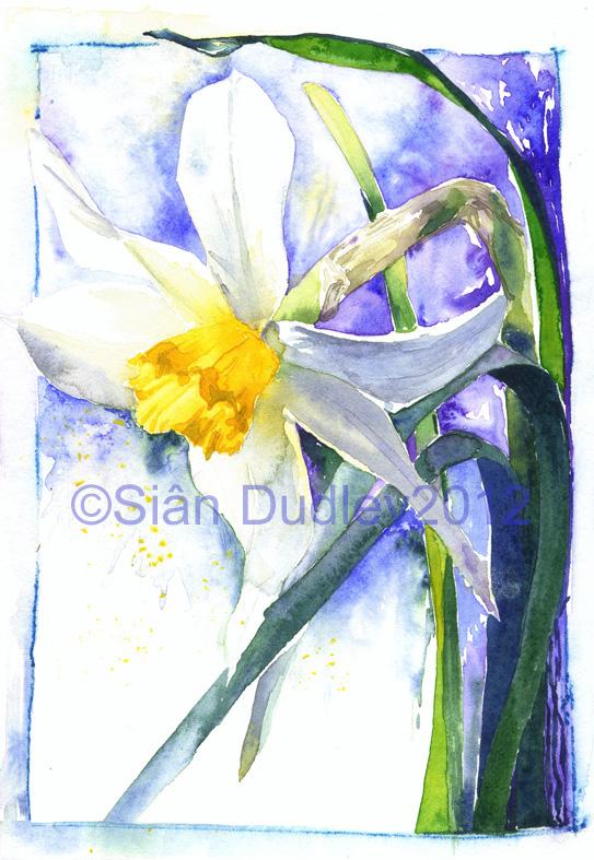 CDancing Daffodil.jpg