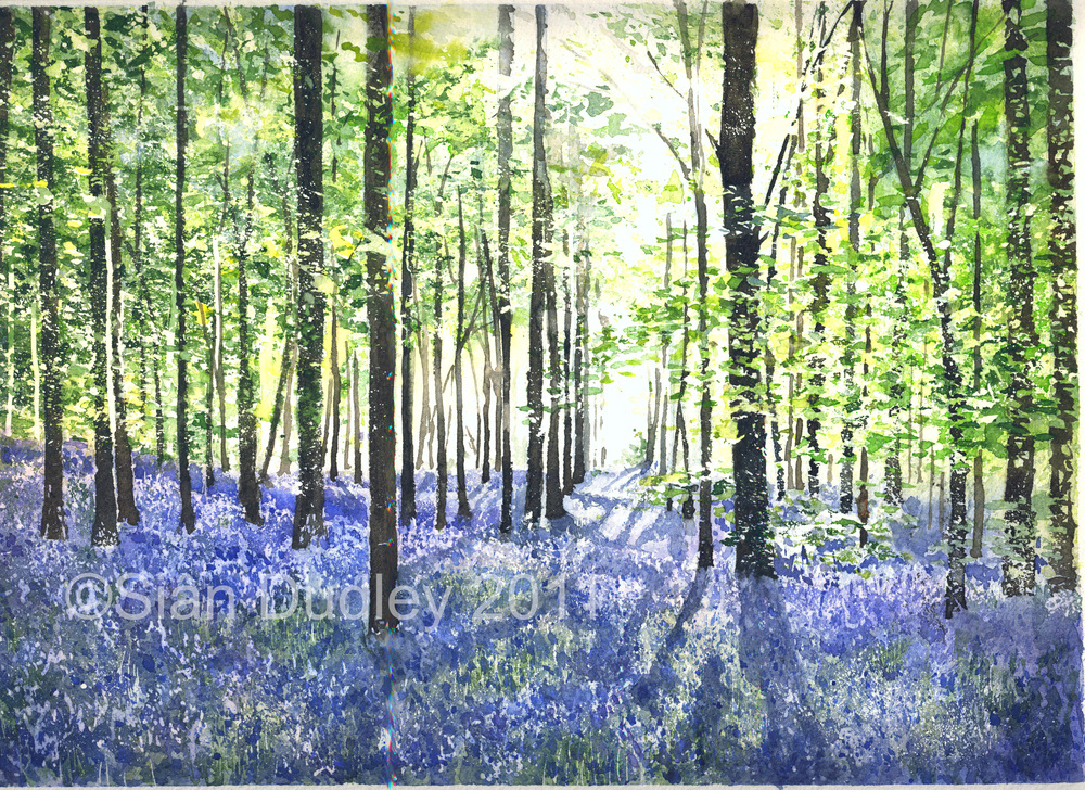 Bluebell Woods Watercolour I 8.25 x11.5 in I £350  BUY