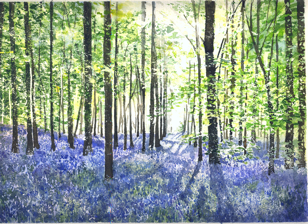 Bluebell Wood Ermington 500dpi copy.jpg