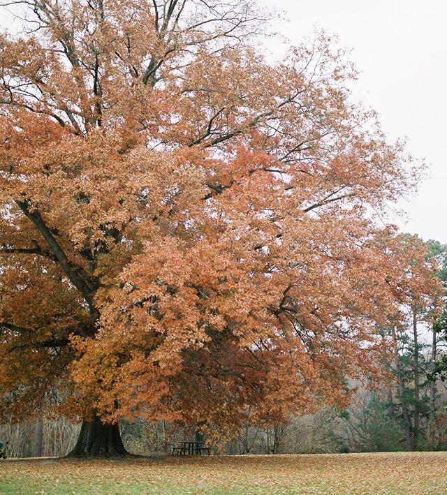 Farewell fall ✌🏼