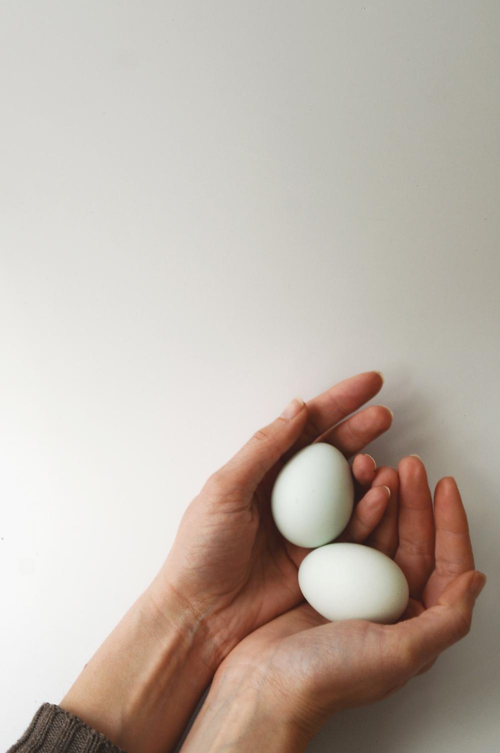 eggs_cover.jpg