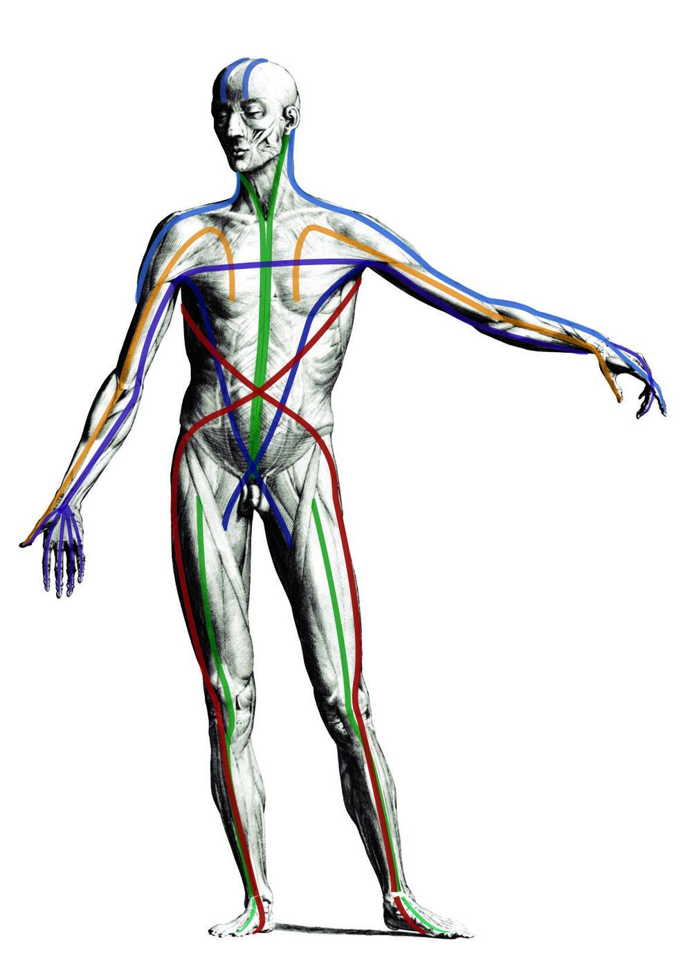 Anatomy Trains Body Rolling Workshop With Gary Edge Kathleen Hall