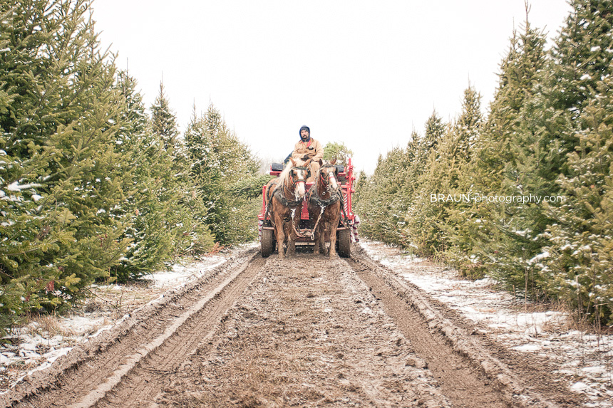 Christmas Trees at the Farm