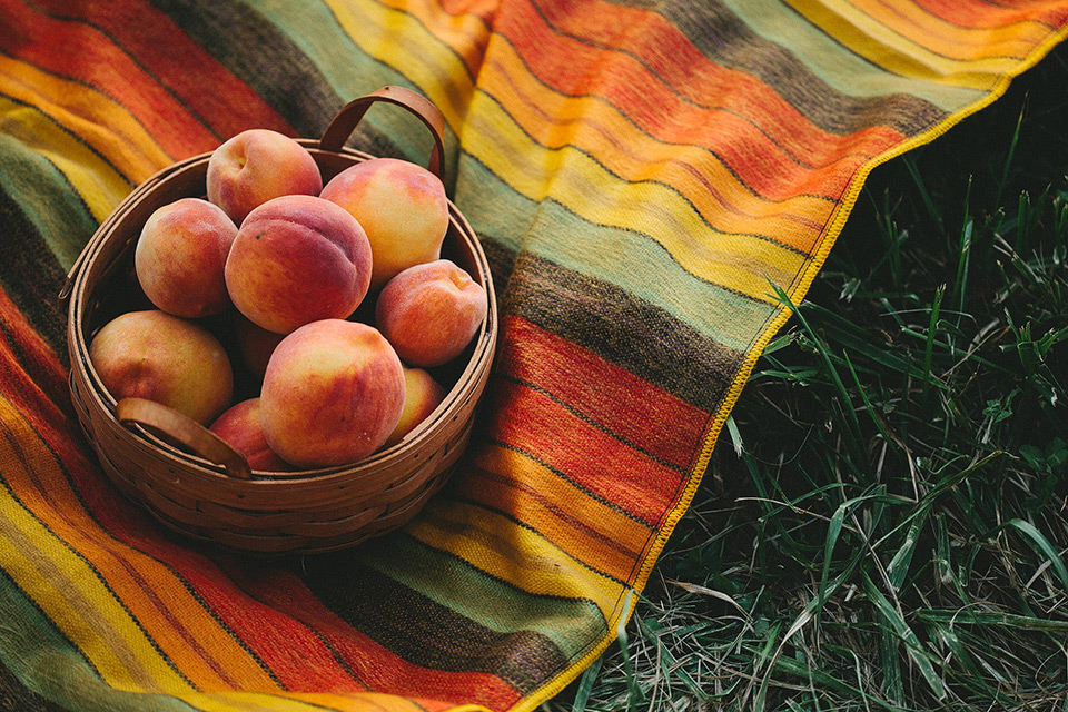 Eckert's Peach Picking in St. Louis, Missouri