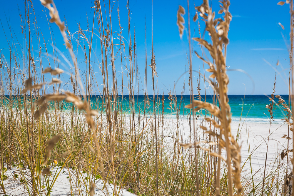 Destin Dunes and Sea Oats