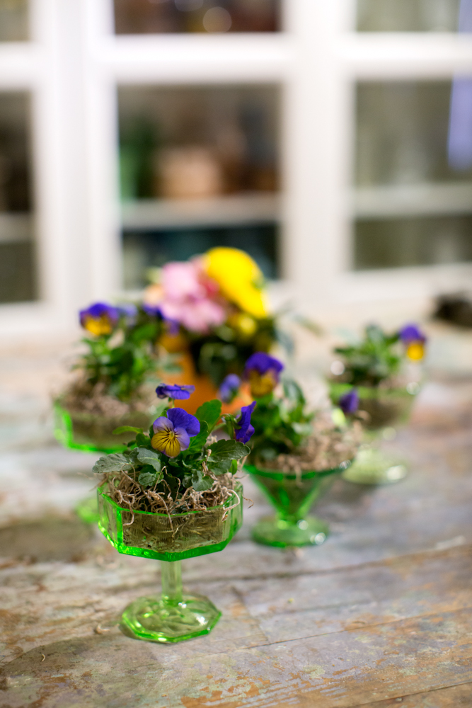 BloomOfTime_CPPhoto_DIY_PottedFlowers-7.jpg